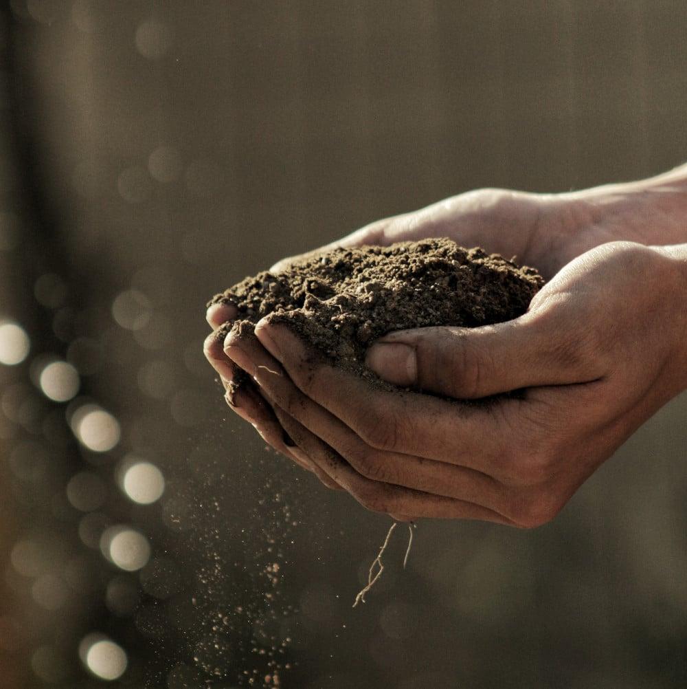 ProE Bioenergie Biokohle Landwirtschaft – Pflanzenkohle